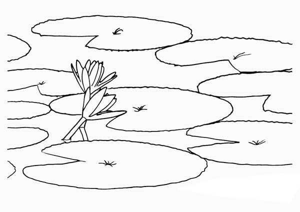 lily pads drawing lily pad flower drawing at paintingvalleycom explore drawing pads lily