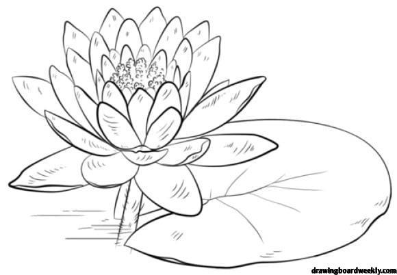 lily pads drawing lily pad line drawing clipart best lily drawing pads