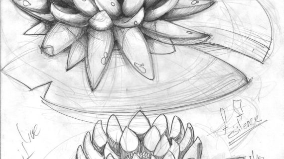 lily pads drawing lily pad line drawing michael flickr pads lily drawing