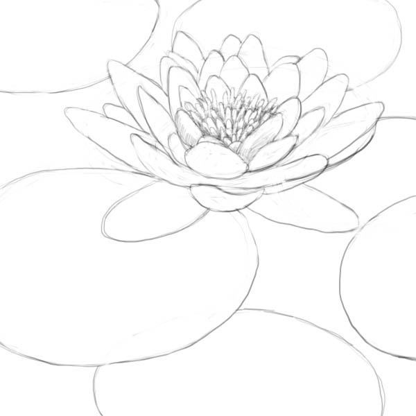 lily pads drawing lily pads 1353j in 2019 products lily pad drawing pads drawing lily