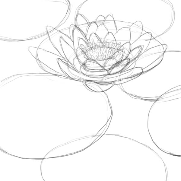 lily pads drawing lily pads drawing the home interior ideas drawing lily pads