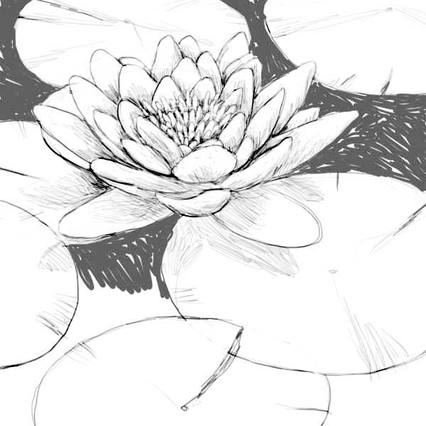 lily pads drawing lilypad drawing at getdrawings free download pads drawing lily