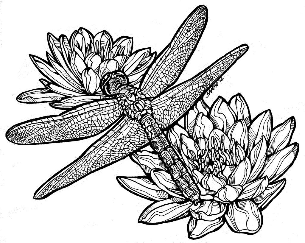 lily pads drawing pin by wallace mary barber on art sherpa traceable lily pads drawing