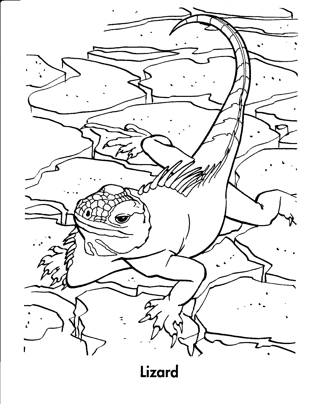 lizard picture to color free lizard coloring pages to lizard color picture