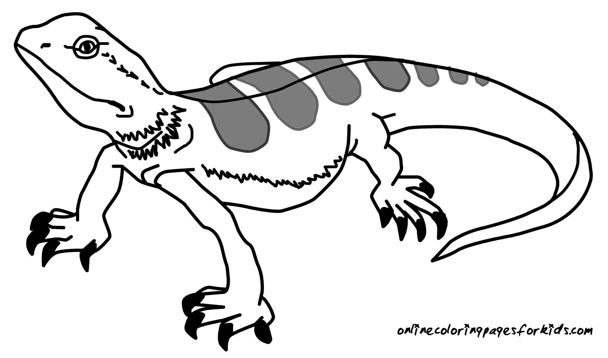 lizard picture to color lizard coloring pages color lizard to picture