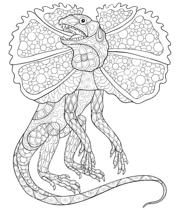 lizard picture to color lizard coloring pages to download and print for free color picture lizard to