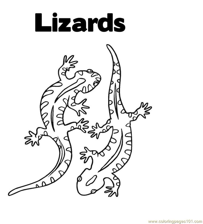 lizard picture to color printable lizard coloring pages for kids cool2bkids to color picture lizard