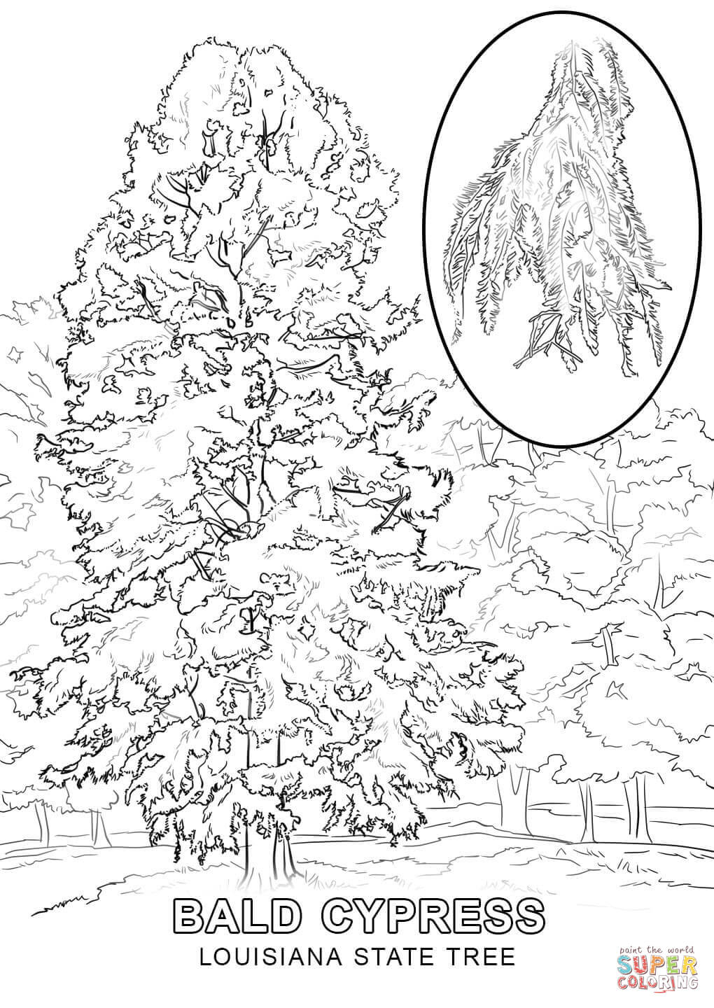 louisiana coloring pages louisiana state tree coloring page free printable coloring louisiana pages