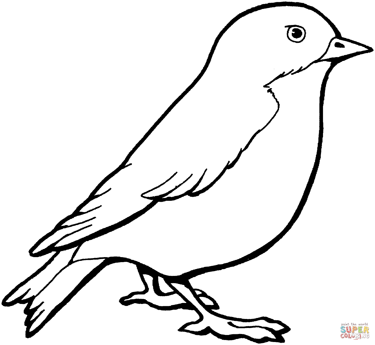 macaw pictures to color bird of paradise coloring page at getcoloringscom free pictures to color macaw