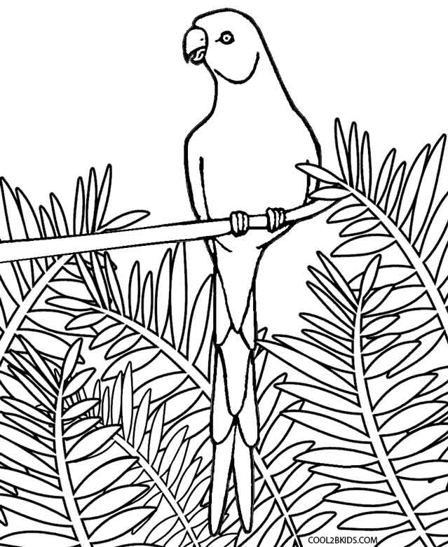 macaw pictures to color birds for kids birds kids coloring pages color pictures to macaw