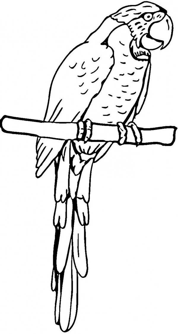 macaw pictures to color perched canary bird coloring page supercoloringcom pictures to macaw color