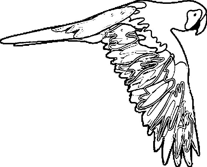 macaw pictures to color pets coloring pages best coloring pages for kids macaw pictures to color
