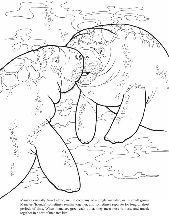 manatee coloring page manatee coloring book dover mp k week 1 pinterest page coloring manatee