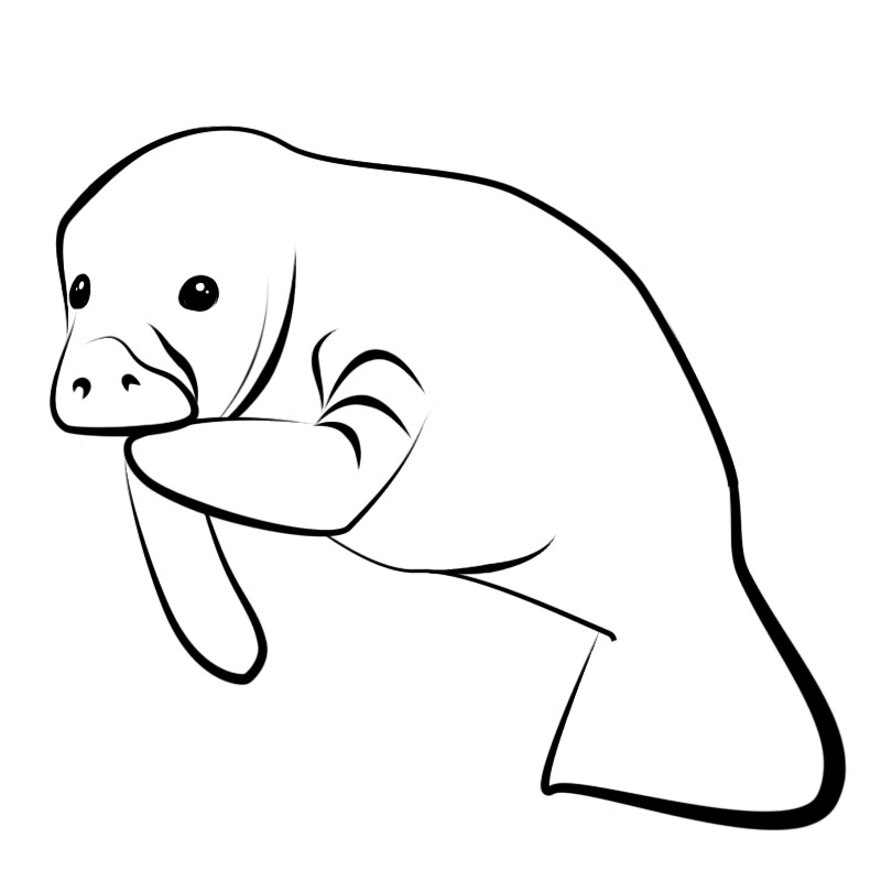 manatee coloring page manatees coloring pages coloring home page manatee coloring