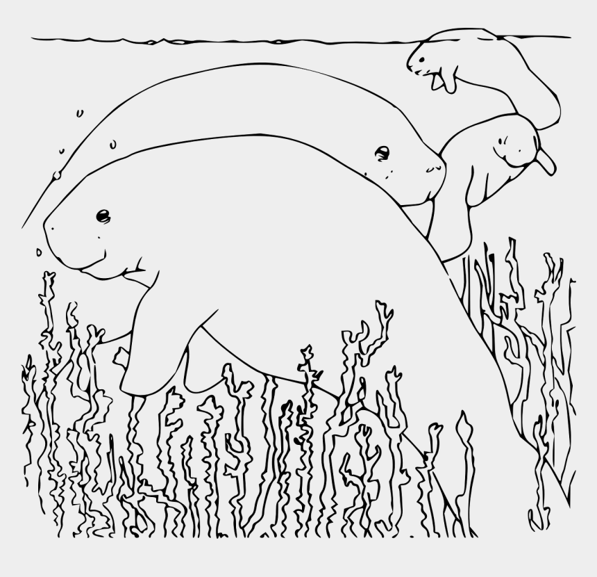 manatee coloring page printable coloring pages of manatees hobbies creativity coloring manatee page