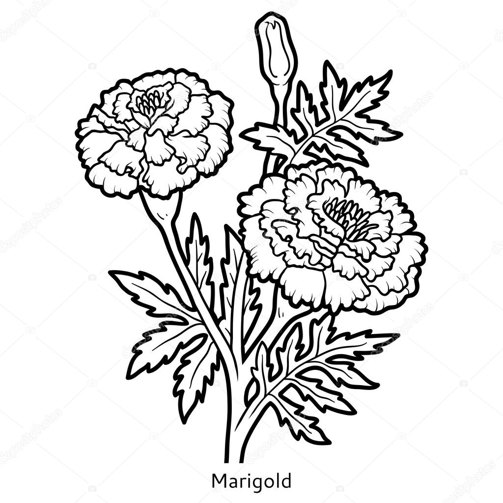 marigold coloring page coloring book flower marigold stock vector ksenya coloring page marigold