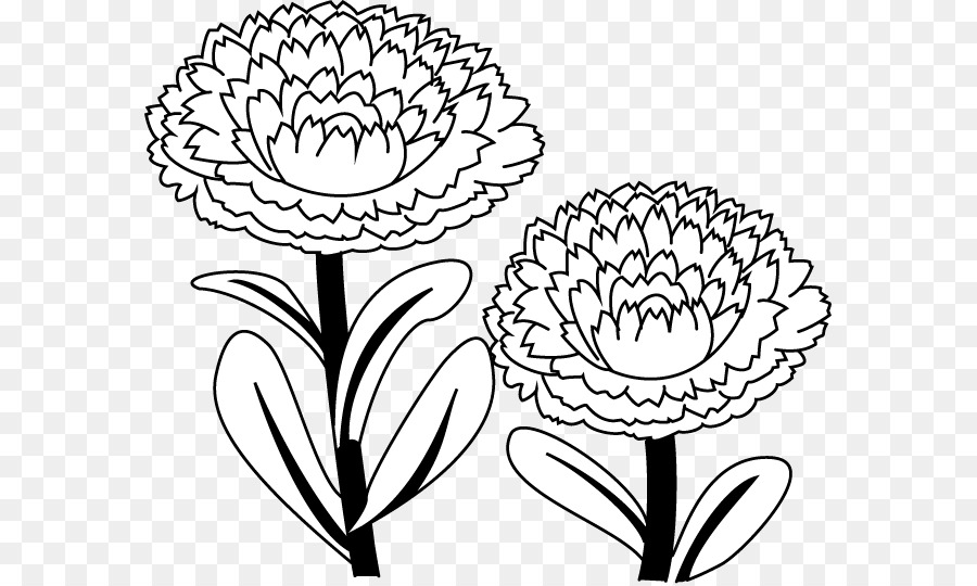 marigold coloring page marigold flower coloring page download print online coloring page marigold
