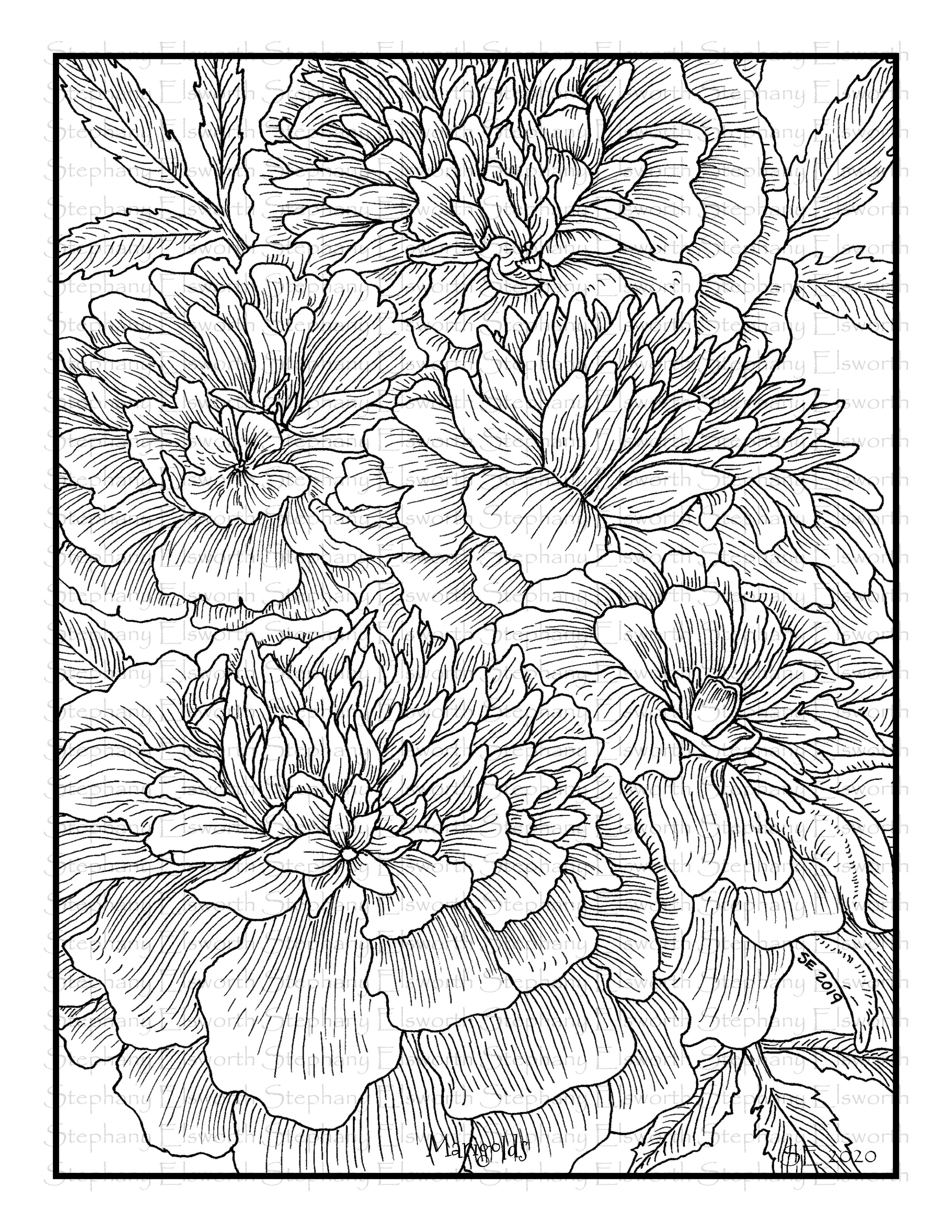 marigold coloring page marigold flower coloring pages download and print marigold page coloring