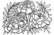 marigold coloring page marigolds coloring pages free coloring pages marigold coloring page