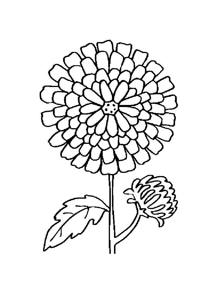 marigold coloring page marigolds printable coloring page color with steph page coloring marigold