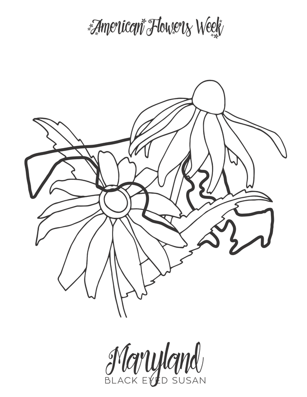 michigan state flower 50 state flowers free coloring pages american flowers week state flower michigan
