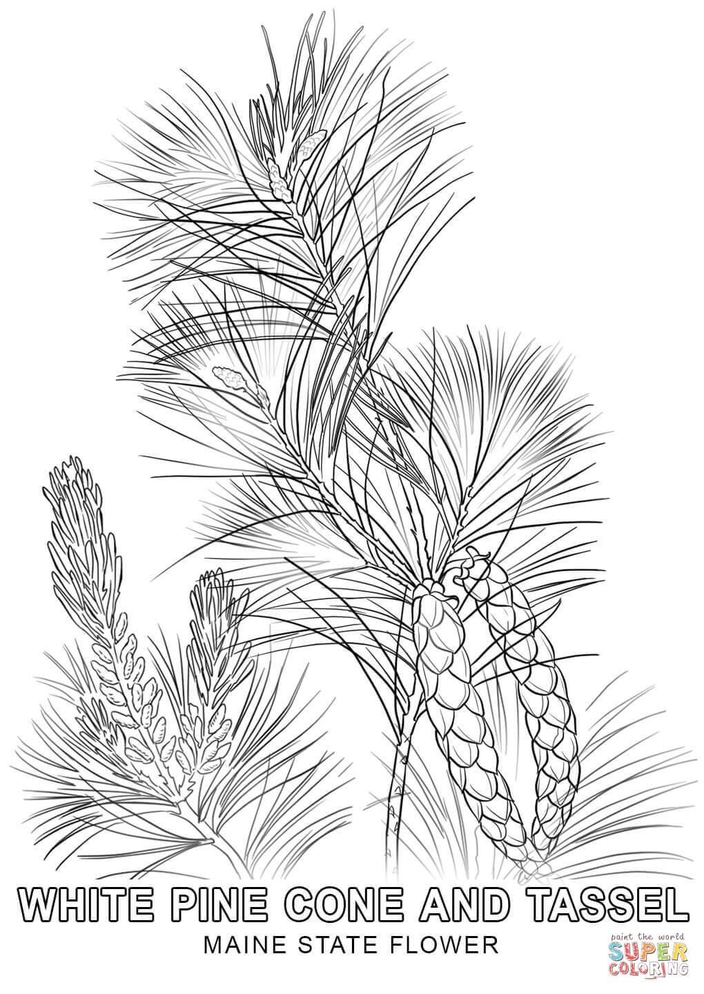 michigan state flower maine state flower coloring page free printable coloring flower state michigan