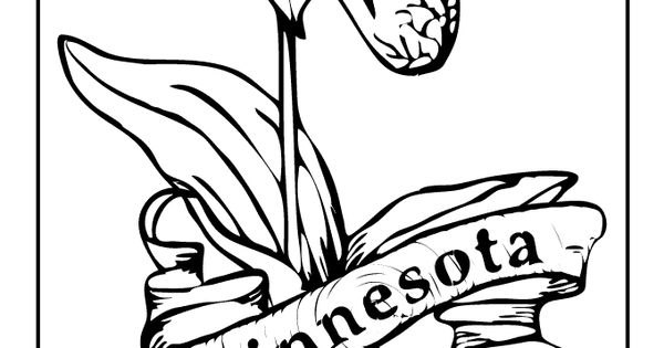 minnesota state flower state flower coloring pages minnesota state flower flower minnesota state