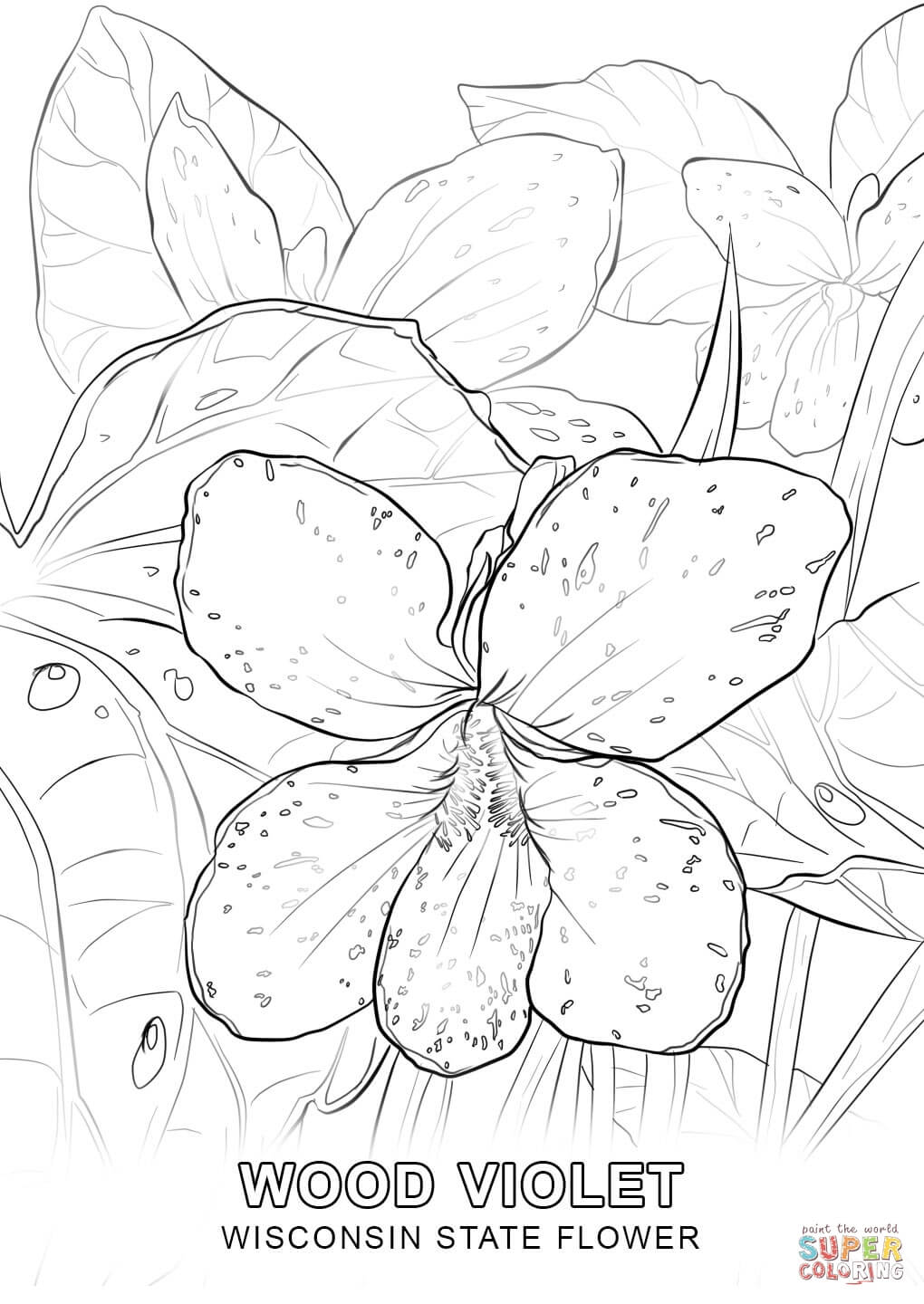 minnesota state flower wisconsin state flower coloring page free printable state minnesota flower