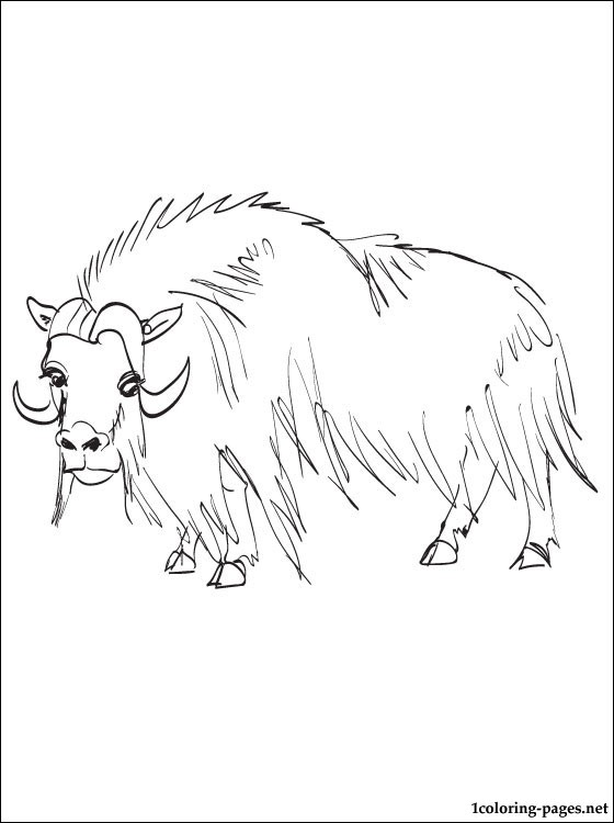 musk ox coloring page arctic musk ox coloring coloring pages page ox musk coloring