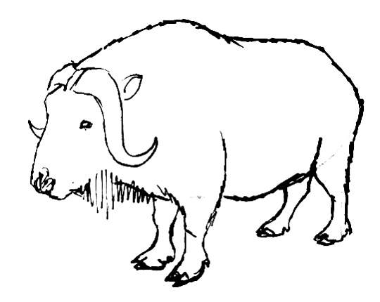 musk ox coloring page arctic tundra land animals coloring pages ox coloring page musk