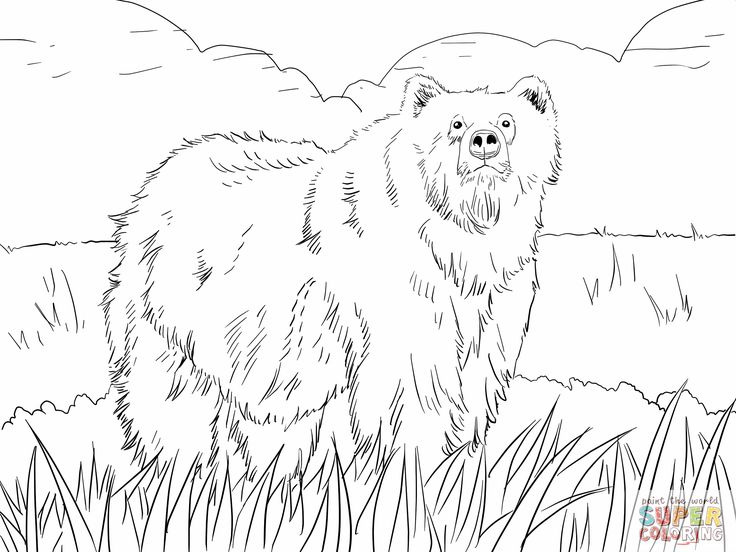 musk ox coloring page click realistic musk ox coloring page for printable ox musk page coloring