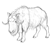 musk ox coloring page download muskox coloring for free designlooter 2020 musk ox coloring page