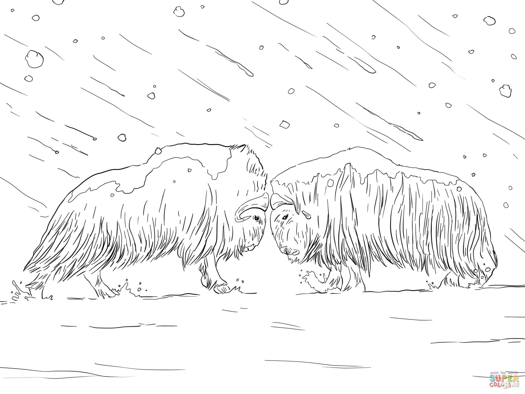 musk ox coloring page musk ox coloring page at getdrawings free download musk coloring ox page