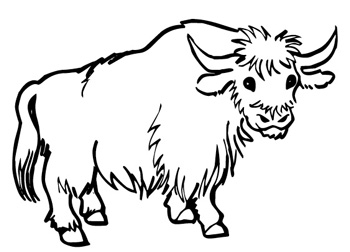 musk ox coloring page musk ox coloring pages musk ox page coloring