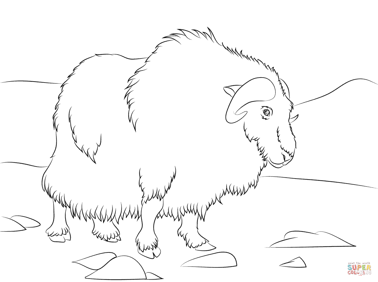 Musk ox coloring page