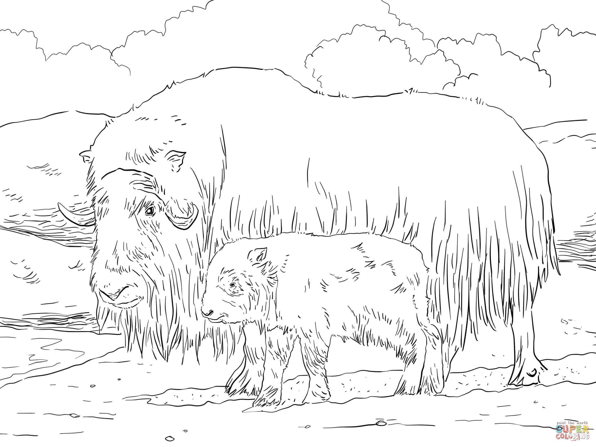 musk ox coloring page ox coloring page at getcoloringscom free printable page musk coloring ox