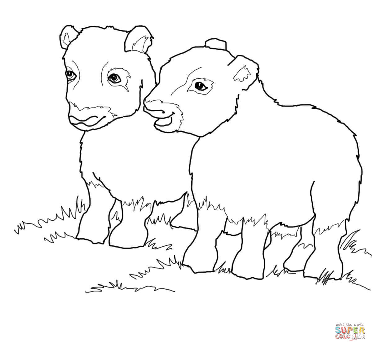 musk ox coloring page ox drawing at getdrawings free download coloring ox musk page