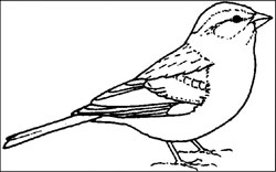 nevada state bird free sagebrush clipart nevada state bird