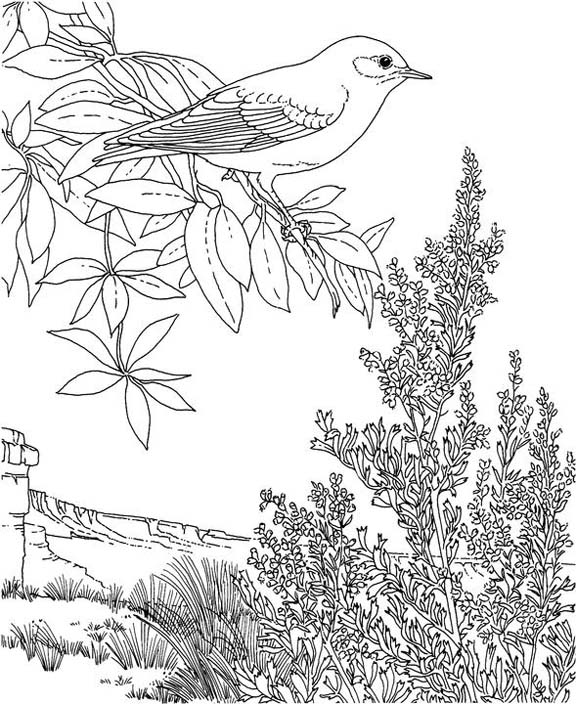 nevada state bird nevada mountain bluebird coloring page purple kitty state nevada bird