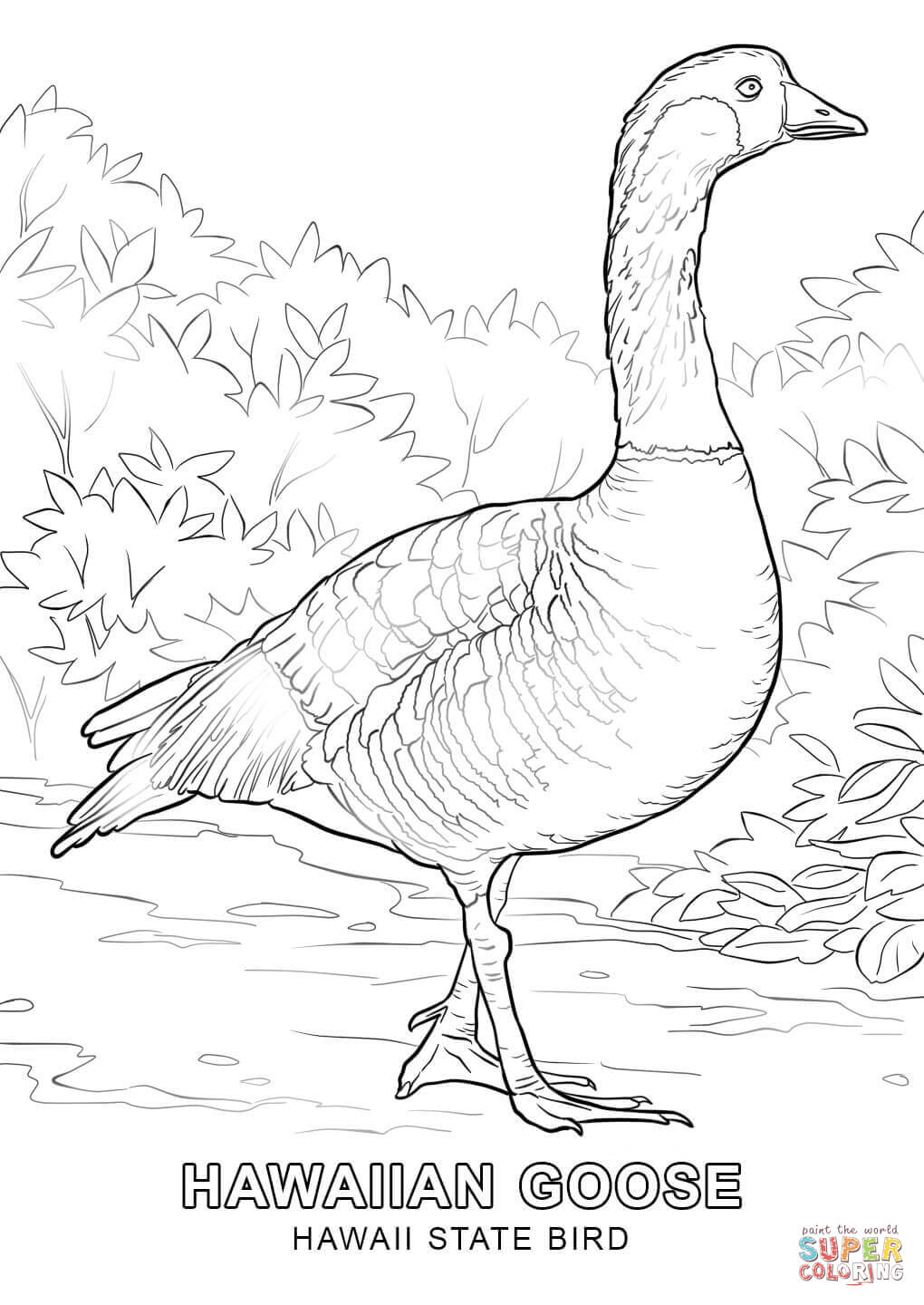 nevada state bird nevada state bird coloring page school project ideas nevada bird state