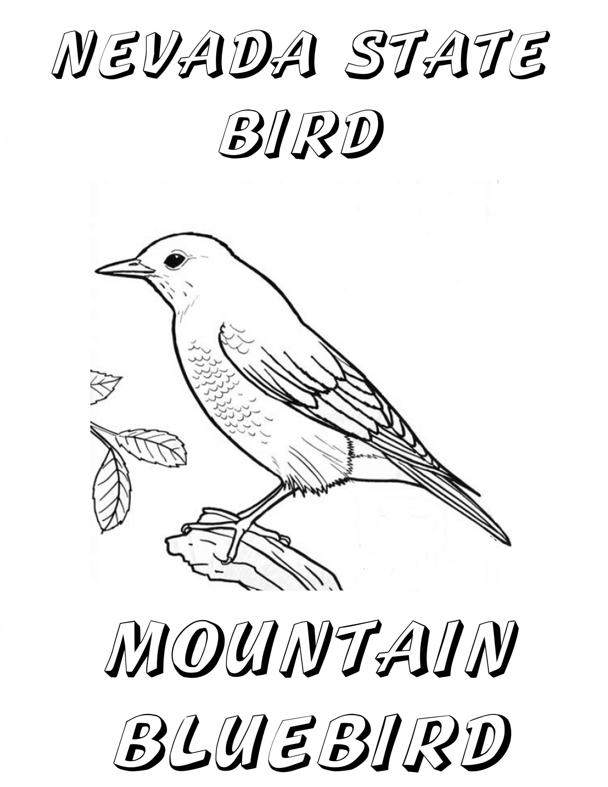 nevada state bird pin by sarah goettge on coloring pages with images state bird nevada
