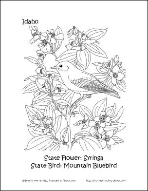 nevada state bird tennessee state bird coloring page free printable bird nevada state