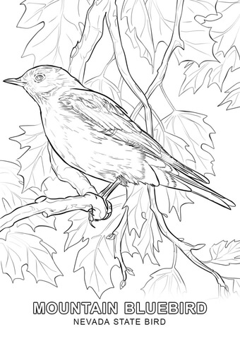 nevada state bird usa states state of nevada coloring pages state nevada bird