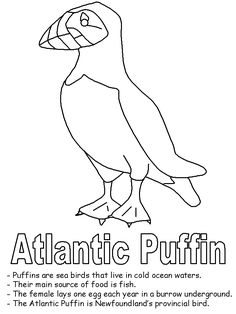newfoundland flag coloring page 315 best puffins images puffins bird birds sea birds newfoundland coloring page flag
