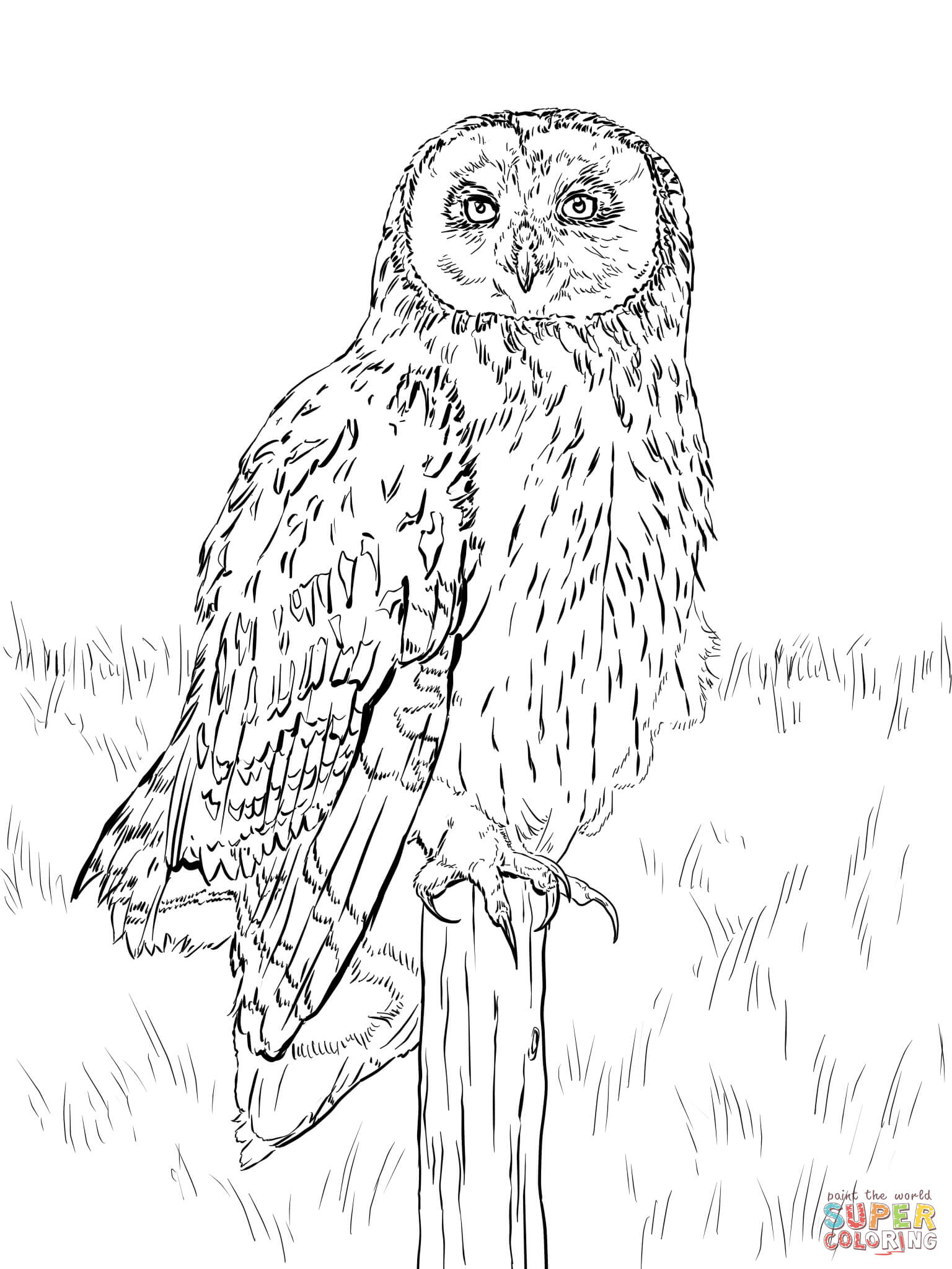 nocturnal animals coloring sheets free coloring pages of nocturnal animals coloring page blog coloring sheets nocturnal animals
