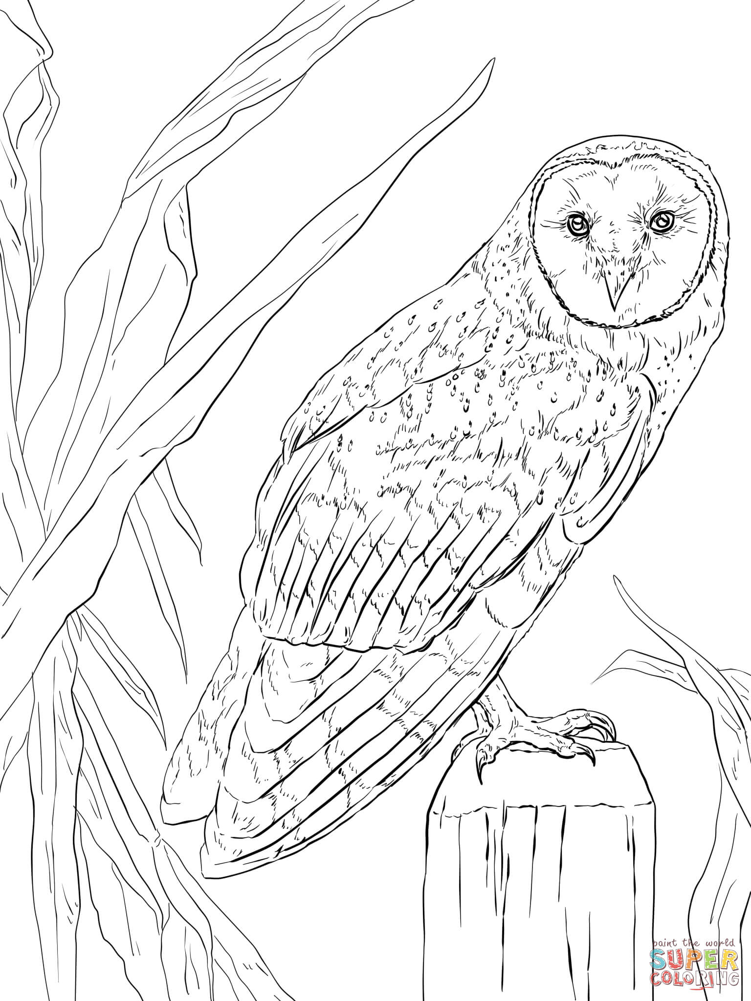 nocturnal animals coloring sheets free pictures of nocturnal animals download free clip art sheets nocturnal coloring animals