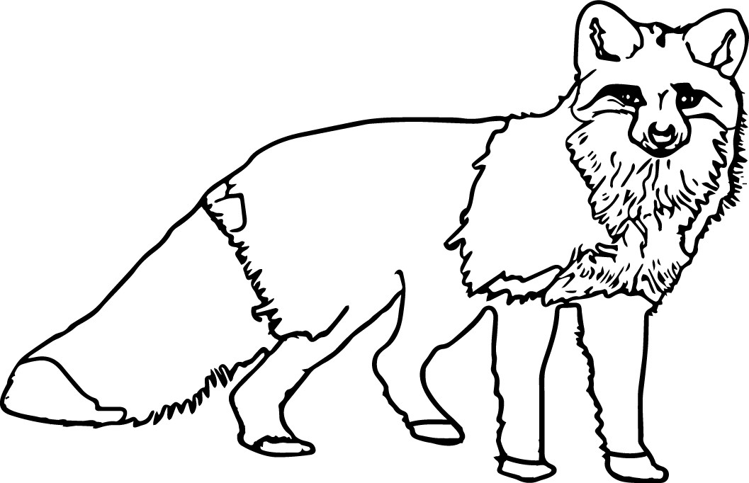 nocturnal animals coloring sheets nocturnal animals coloring pages at getdrawings free nocturnal animals coloring sheets