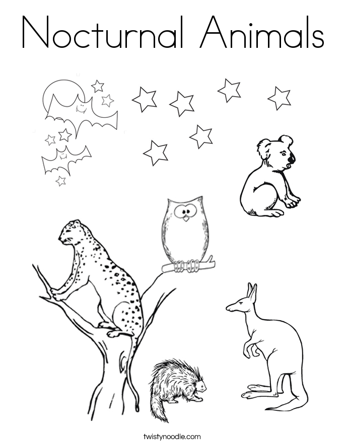 nocturnal animals coloring sheets pictures of nocturnal animals coloring home sheets nocturnal animals coloring