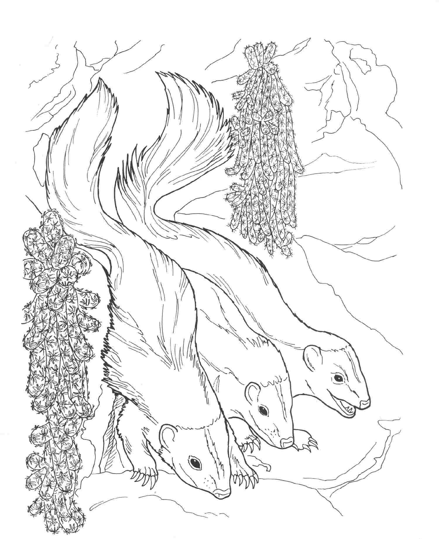 nocturnal animals coloring sheets top 10 porcupine coloring pages for toddlers nocturnal coloring sheets nocturnal animals