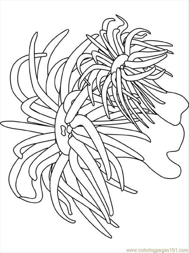ocean plants coloring pages image result for simple coral reef coloring pages coral coloring ocean plants pages
